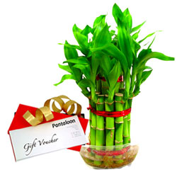 Combo Gift of Indoor Bamboo Plant and Pantaloons Gift Voucher