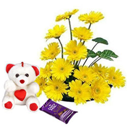 Stunning Arrangement of Yellow Gerberas with Teddy N Cadbury Silk