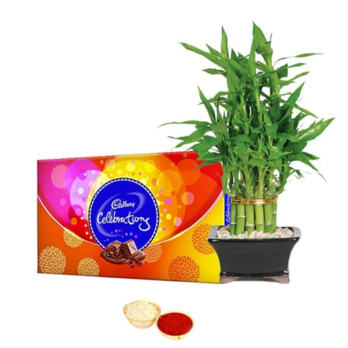 Yummy Cadbury celebrations N Bamboo Plant