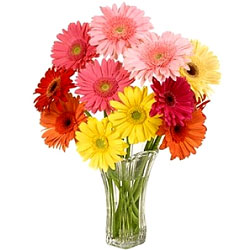 Blossoming Mixed Gerberas in Glass Vase