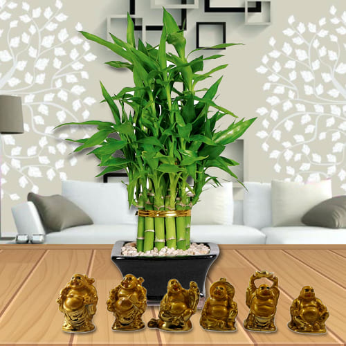 Decorative 2 Tier Lucky Bamboo Plant in Glass Pot with Laughing Buddha Set