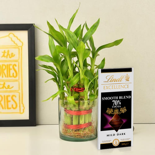 Leafy 2 Layer Good Fortune Bamboo Plant in Glass Pot with Tasty Lindt Chocolate