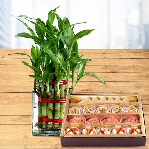 Fascinating Gift of 2 Layer Lucky Bamboo Plant in Glass Pot with Assorted Haldiram Sweets