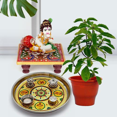 Devotional Puja Gift with Holy Tulsi Plant