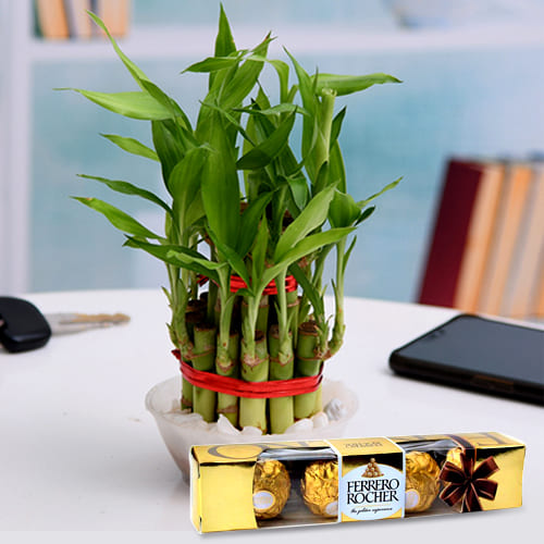 Fantastic Selection of 2 Tier Lucky Bamboo Tree in a Glass Pot with Ferrero Rocher Chocolates